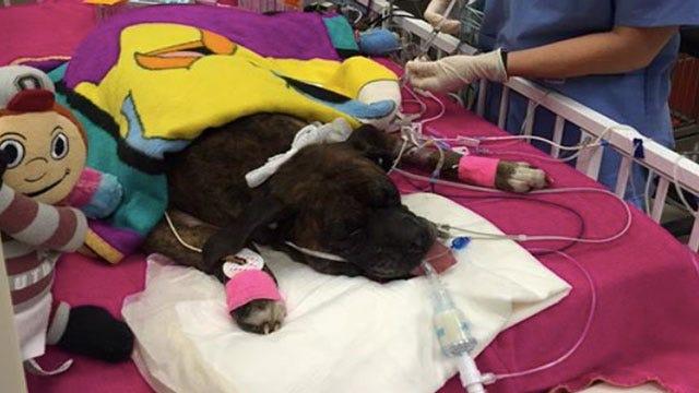Ohio Dog Lauded As House Fire Hero 'Improving'