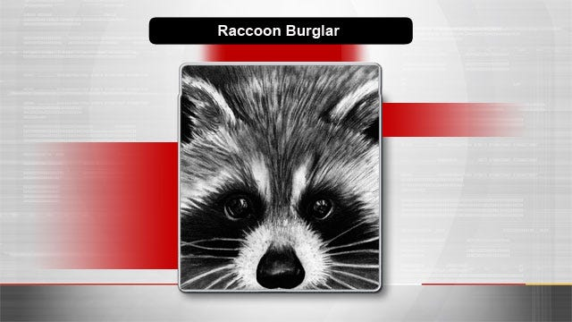 Authorities: Raccoon Is Culprit In OKC Church Burglary