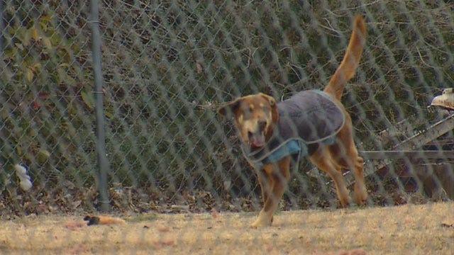 OK Humane Society Hits The Streets To Help Freezing Strays