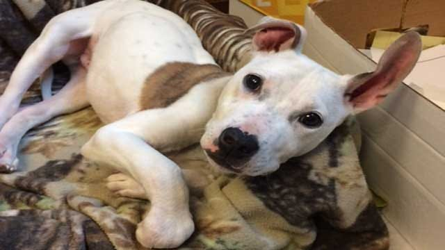 Deformed Dog Abandoned At OKC Shelter, Needs Community Support