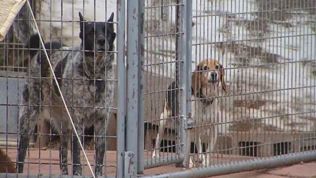 City Of Enid Adopts Dangerous Dog Ordinance