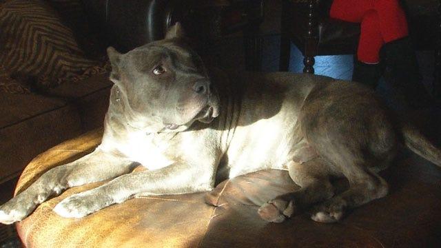 Cooler Heads Prevail In Yukon Dogs Dispute Between Neighbors