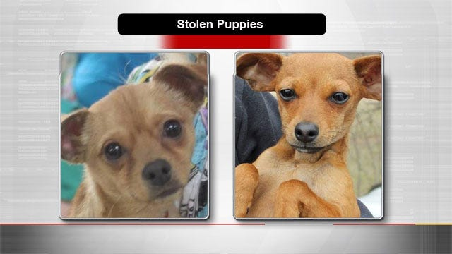 Reward Offered To Help Locate Puppies Reportedly Stolen From Yukon Rescue