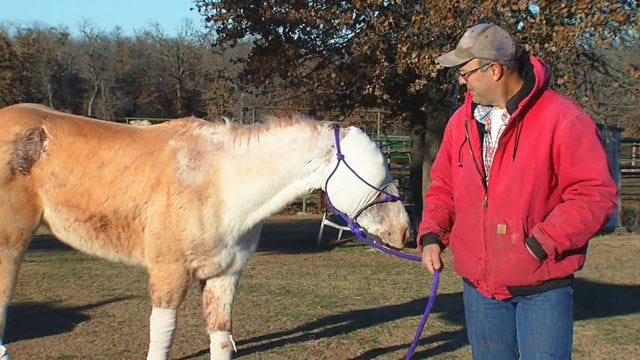 Severely Injured And Left For Dead, Rudy The Horse On The Road To Recovery