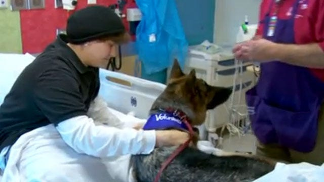 'Doggies For Anthony' Photos Flood In To Cheer Up Cancer Patient