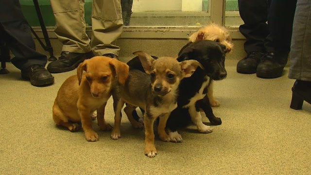 25 Dogs Rescued From Filthy Conditions Outside NW OKC Home