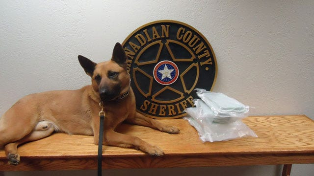 Pickles, The Canadian Co. Drug Dog, Sniffs Out 5 Kilos Of Cocaine