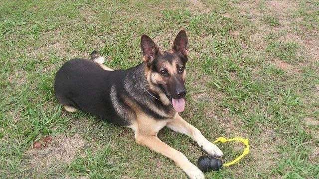 Beloved OK K-9 Put Down Due To Health Concerns, Given Touching Tribute