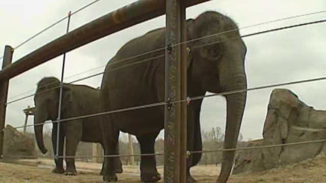 Despite Protests, Seattle To Send Two Elephants To OKC Zoo