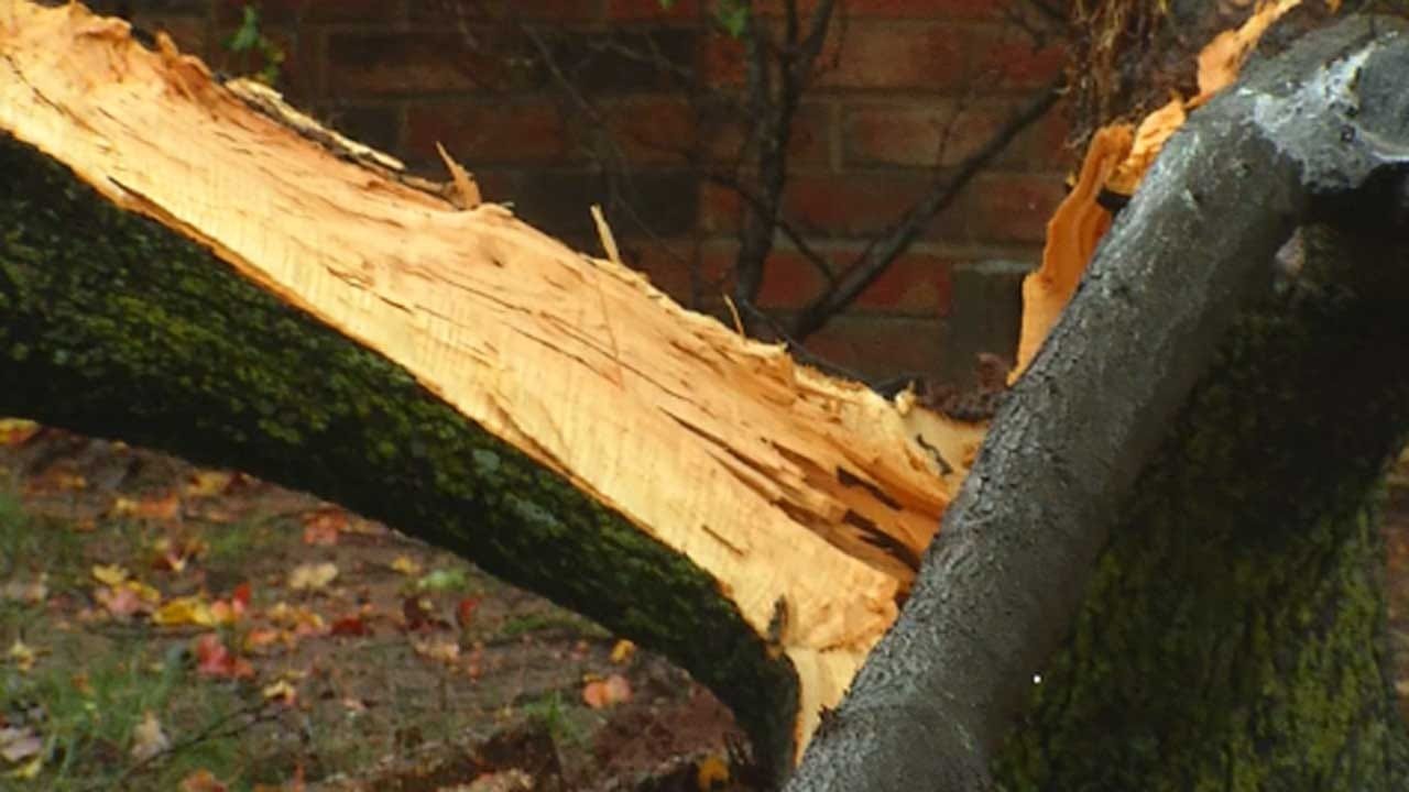 Man Injures Himself When Trying To Remove Tree Limbs