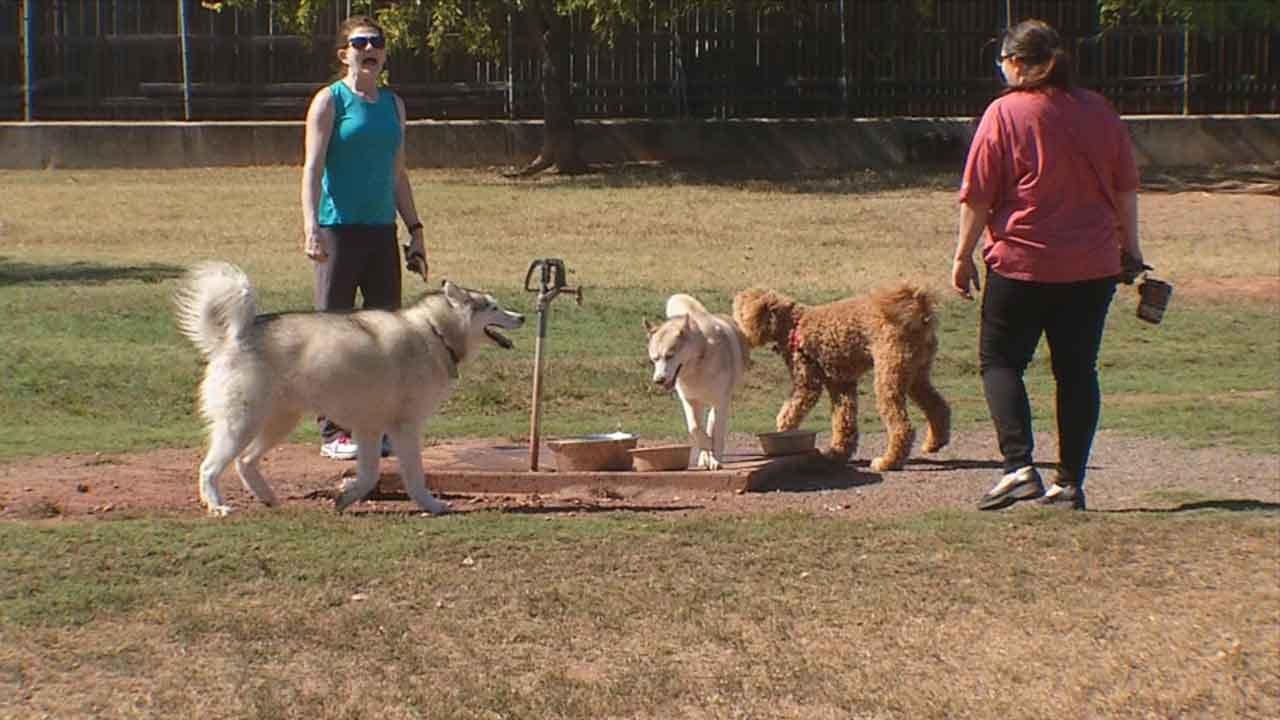 Metro Dog Dies From Parvo After Dog Park Visit