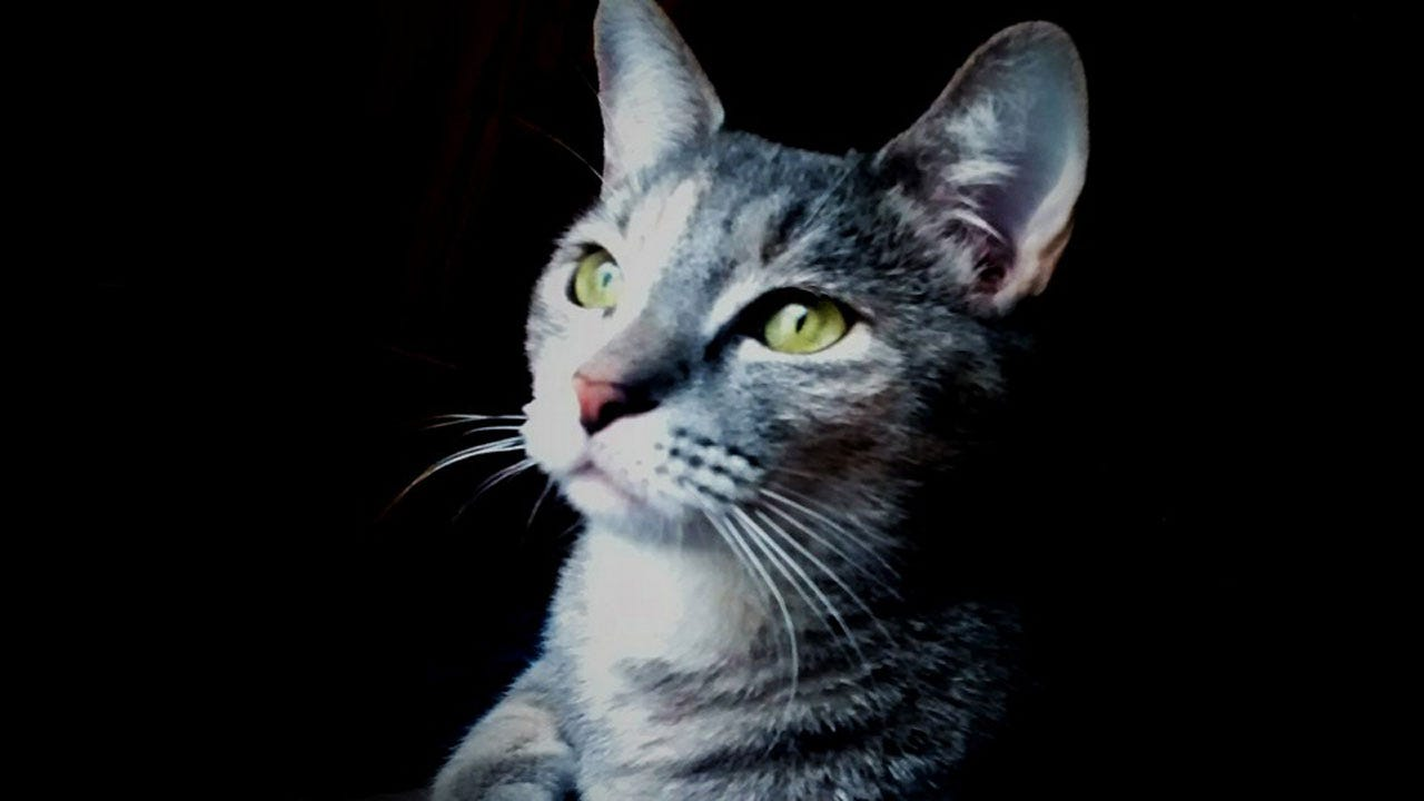 News 9 Viewers Share Photos On National Cat Day