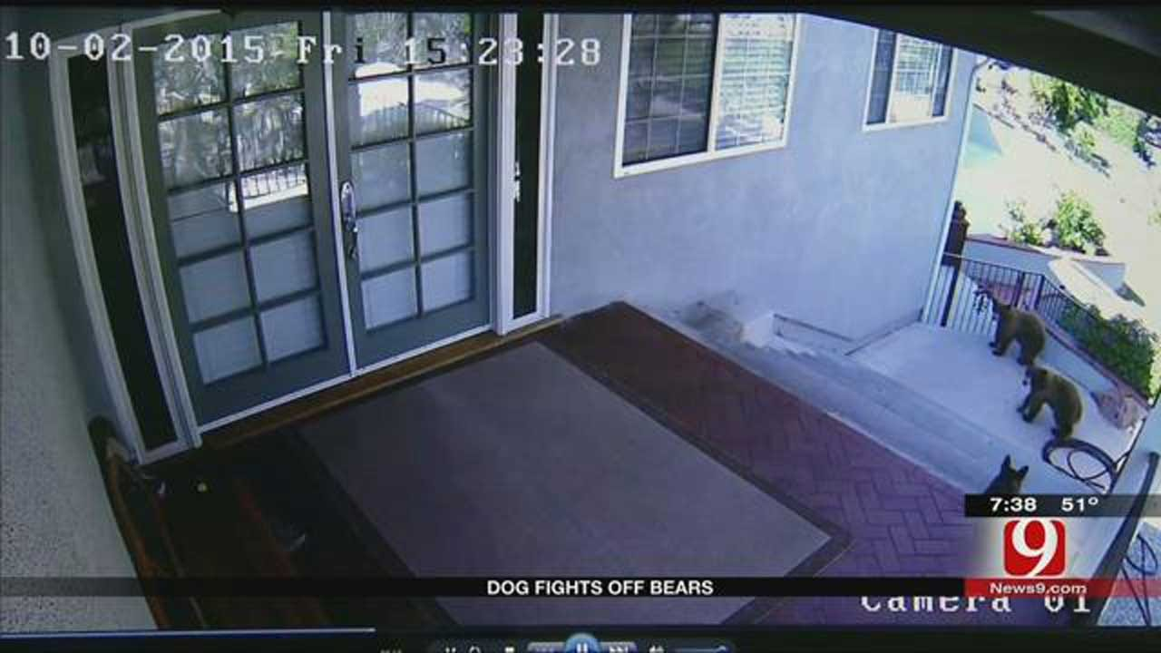 Dog Fights Bears Away From California Home