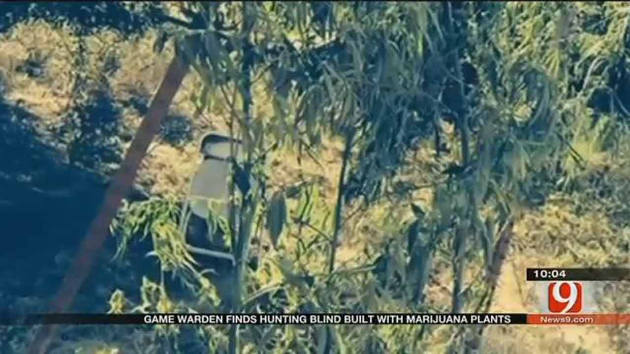Hunting Blind Made Out Of Marijuana, Oklahoma Game Warden Says
