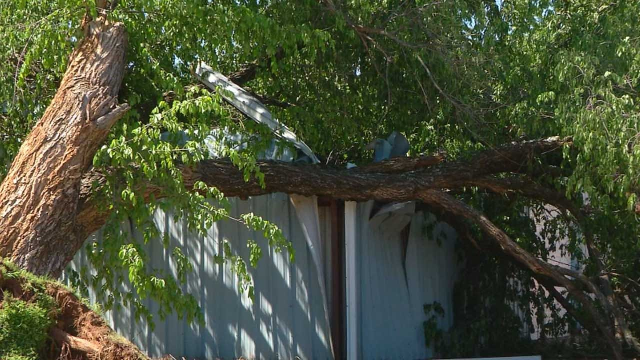 Century-Old Tree Falls Onto Coyle School Building