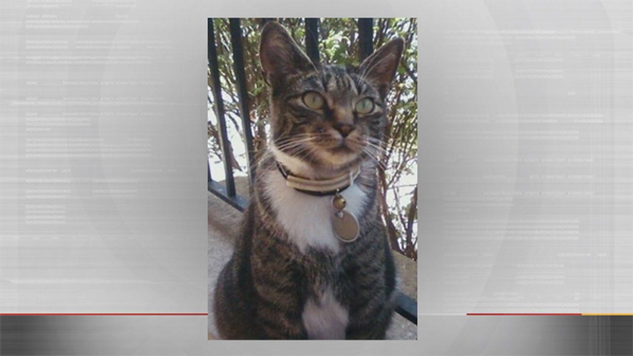 Internet Sensation 'Gato' Missing In Oklahoma
