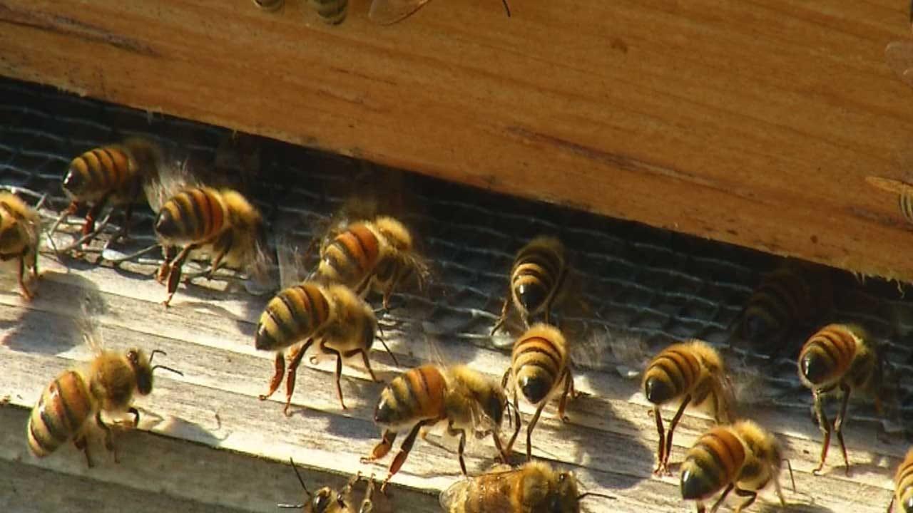 Incident Involving Bees, Hives Wreaks Havoc On SE OKC Walmart