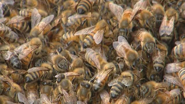 Several Treated For Bee Stings After Hive Transaction Goes Awry In SE OKC