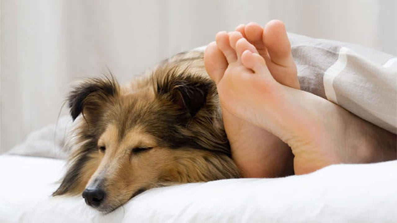 Should You Share Your Bed With Your Pet?