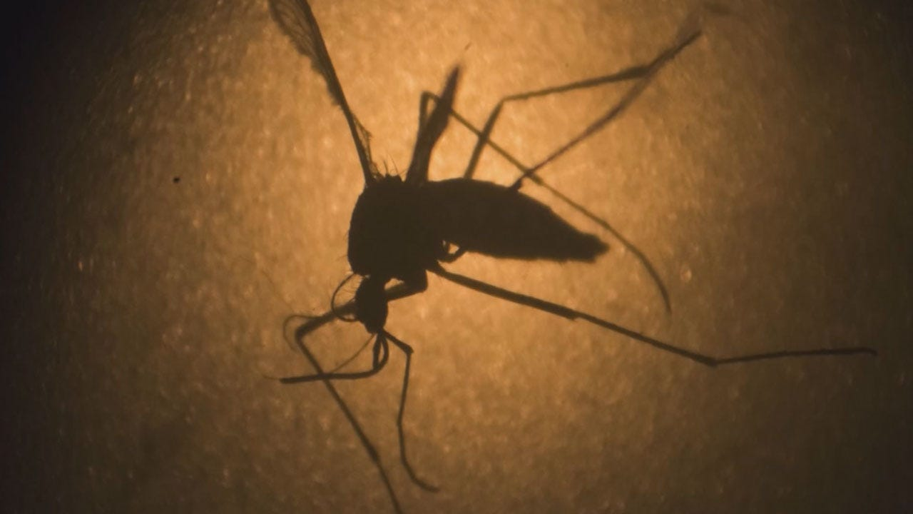 Rare Paralysis Syndrome On The Rise In Zika Outbreak