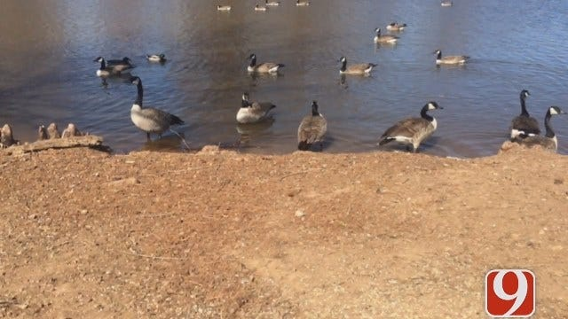 Officials Get Creative With Evicting 'Destructive' Geese From Chickasha Park