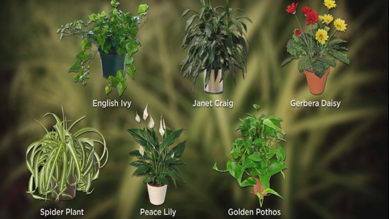 Choose The Right Plants To Detoxify Your Home