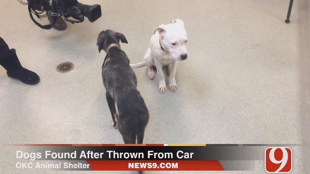 Authorities Investigate After 2 Dogs Reportedly Thrown From Vehicle In OKC