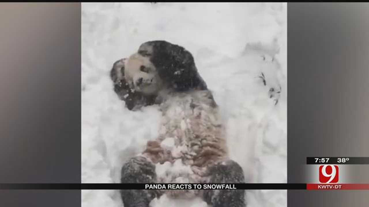 Viral Video: Tian Tian Plays In The Snow