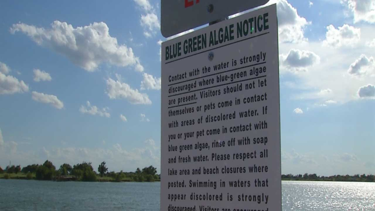Biologists Say Algae Bloom Is Killing Lake El Reno Fish