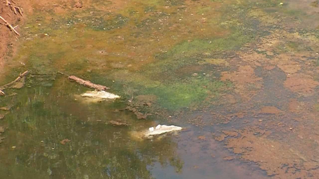 Investigators Look Into Dead Fish Found Near Deep Fork River In Lincoln Co.