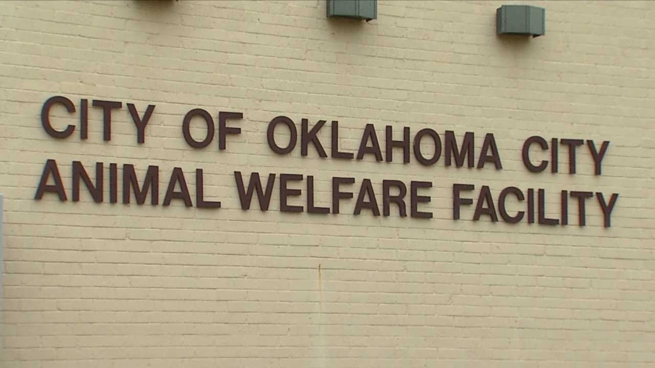 Hundreds Of Homeless Cats Brought To OKC Animal Shelter