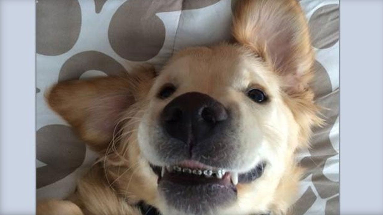Michigan Puppy With Braces Is All Smiles