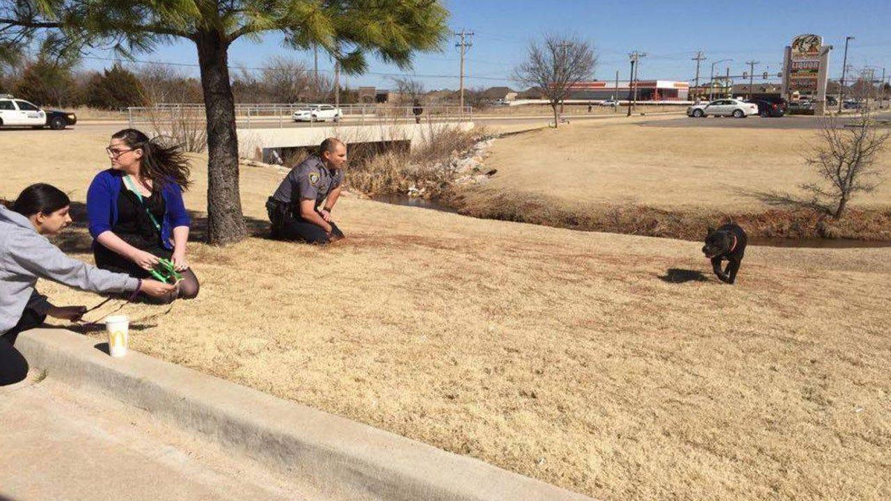 OKC Police Officer Applauded For Saving Stray Dog