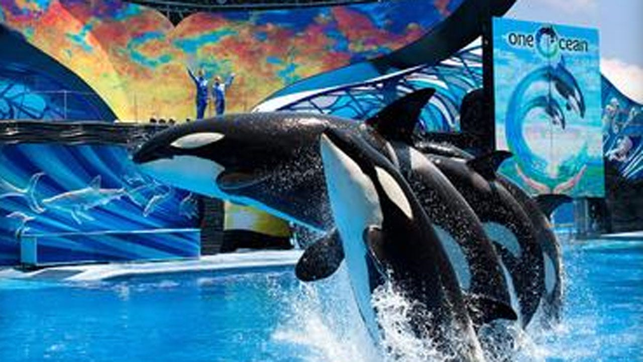 Watershed Changes In SeaWorld's Orcas Policy
