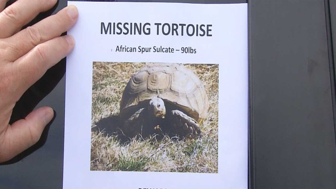 Logan County Woman Searches For Missing Tortoise