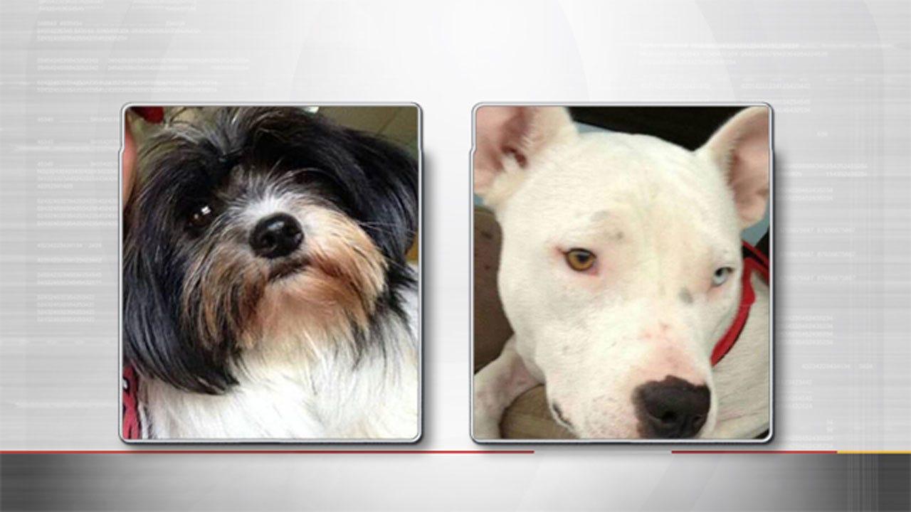 Woman Says Minivan With Pets Inside Was Stolen In Stillwater