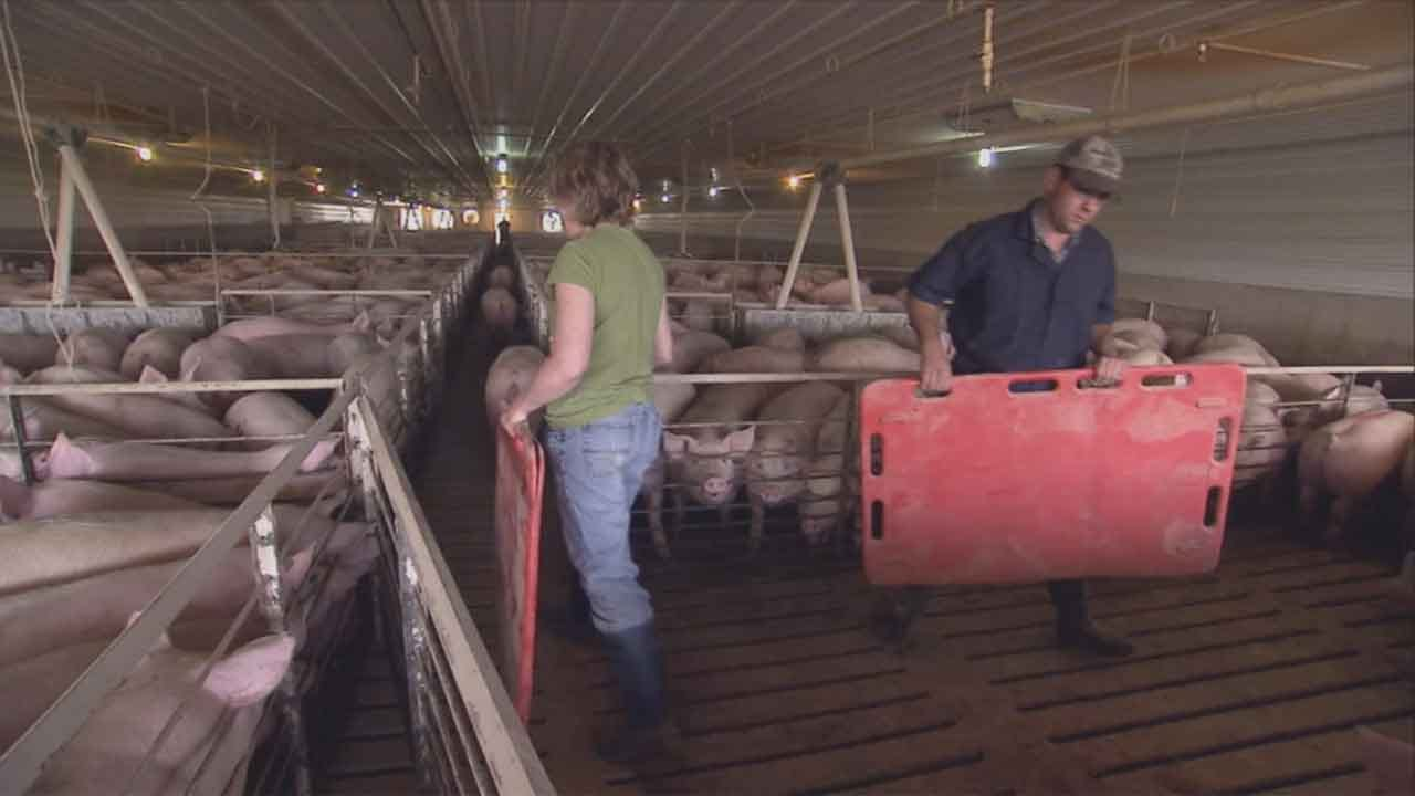 State Question 777, Known As 'Right To Farm,' Voted Down