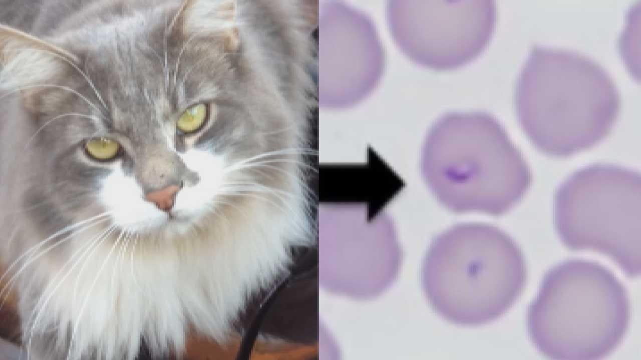 Area Veterinarians Warn Of 'Bobcat' Tick Disease