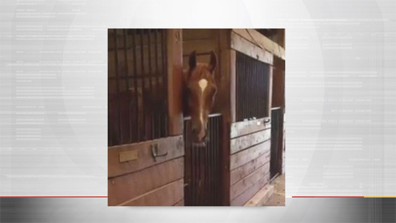 Prized Show Horse Missing From Norman