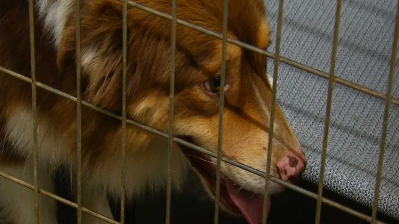Dogs Training To Detect Early Stage Cancer