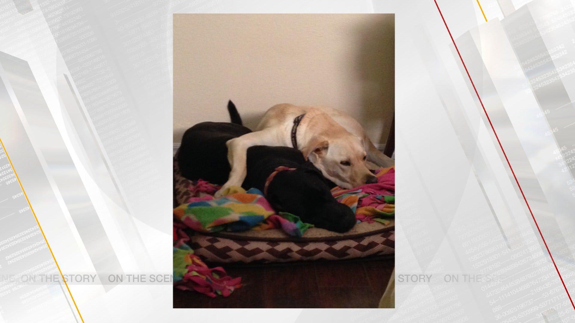 OKC Animal Welfare Offers Free Dog And Cat Adoptions Saturday