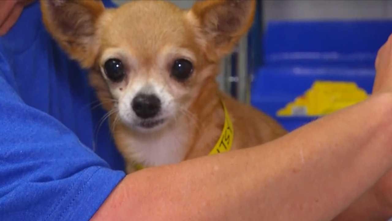 Central OK Humane Society Helps Houston Animal Shelter