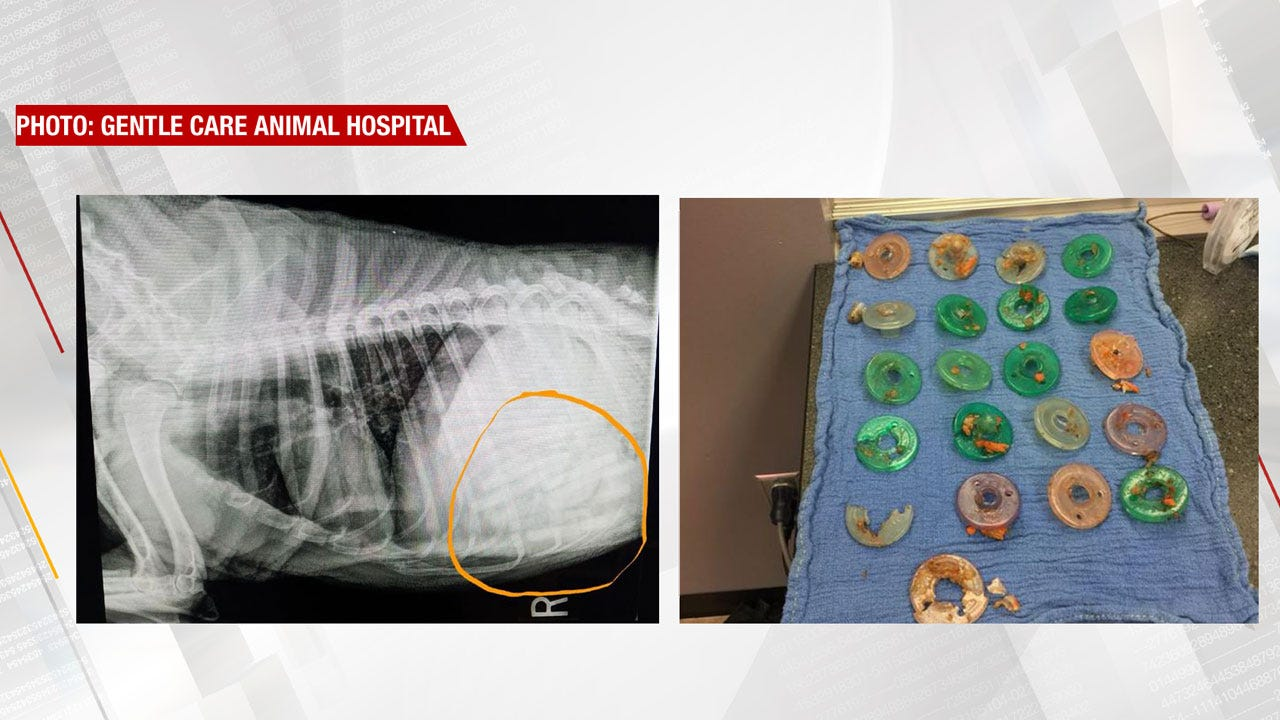 Edmond Veterinarian Removes 21 Pacifiers From Dog's Stomach