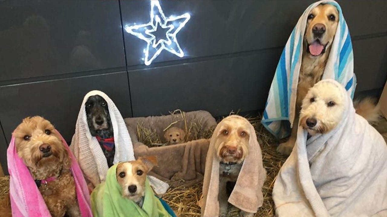 Viral Photo Shows Dogs Posed In Nativity Scene