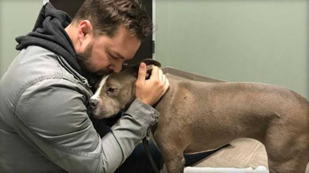 Stolen Dog Reunited With Army Veteran Ahead Of Christmas