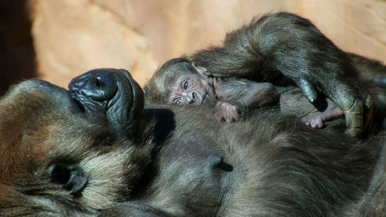 OKC Zoo Says It's A Girl