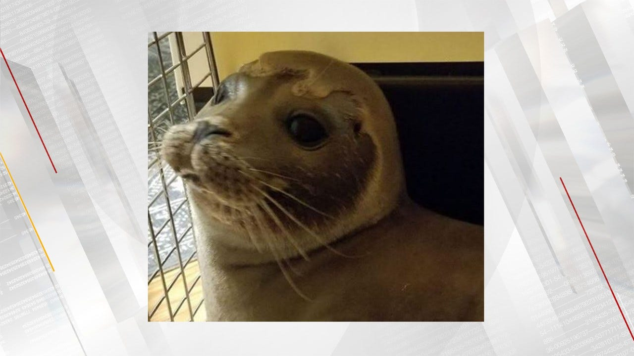 Police Help Capture Baby Seal Found On Wandering Busy Road