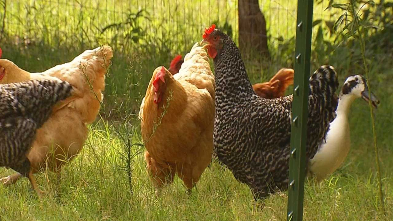 Oklahoma Among 12 States Asking Supreme Court To Block California Egg Law