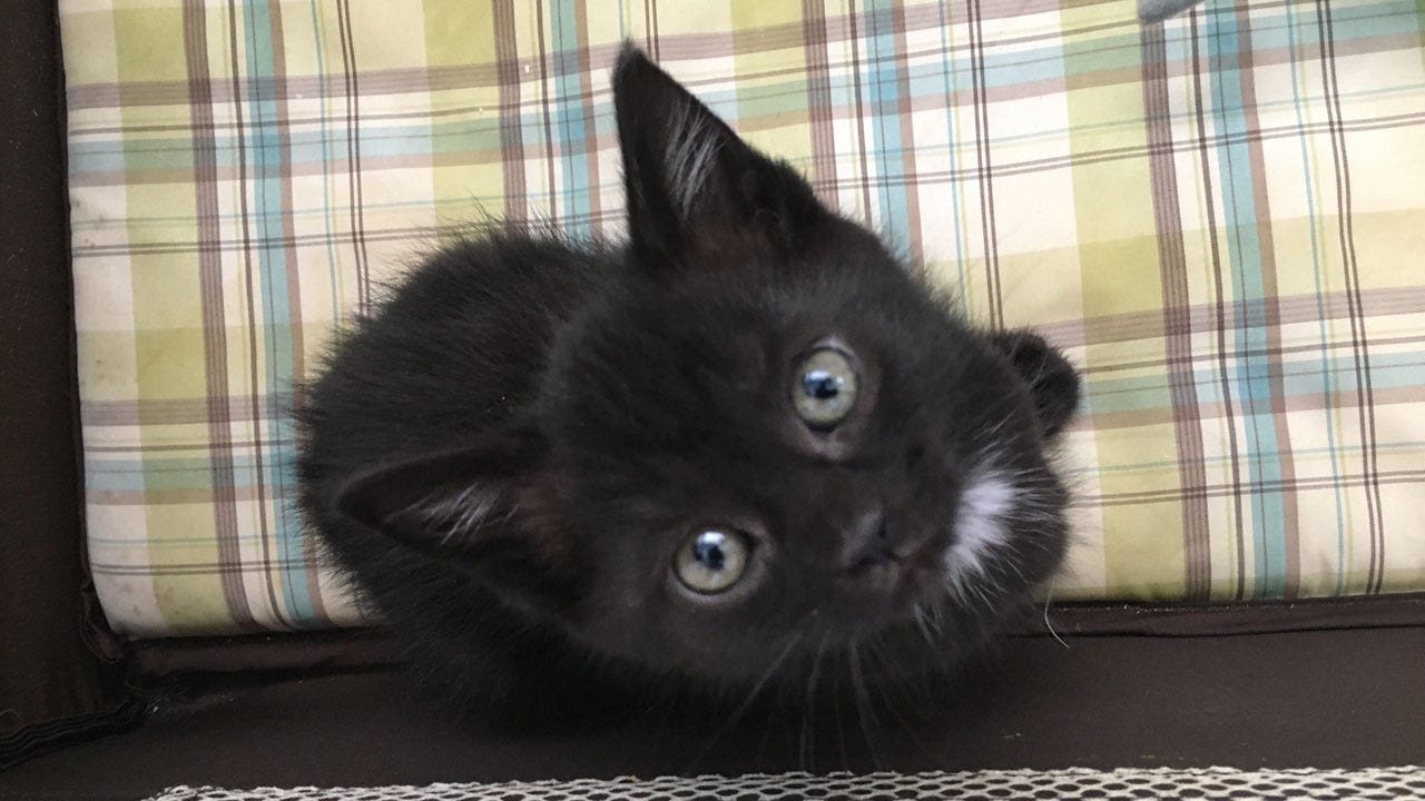 Central Oklahoma Humane Society Needs Hundreds Of Volunteers For Kittens, Puppies