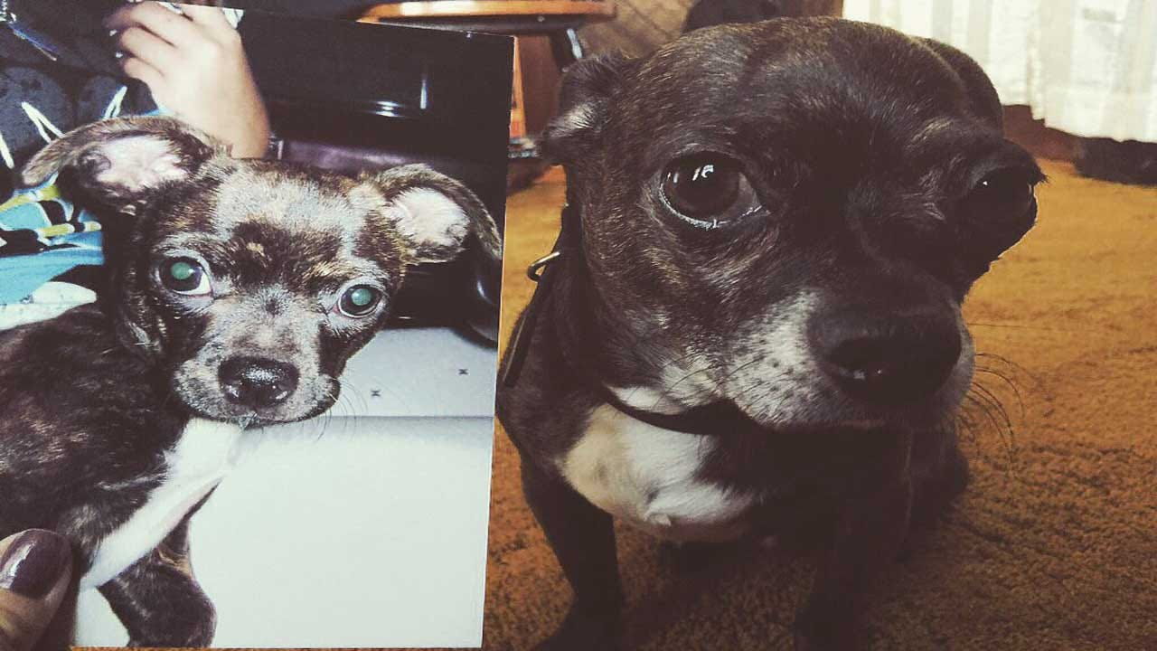 News 9 Viewers Send In Pics In Honor Of 'National Mutt Day'